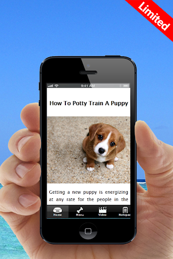 Learn How To Potty Train A Dog
