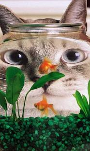 有趣的貓壁紙