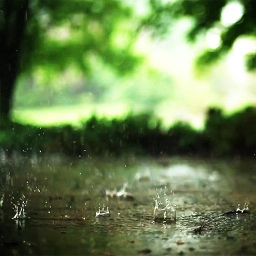 Raining in autumn wallpaper