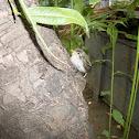 An unknown Baby Bird (एक अज्ञात चिड़िया का बच्चा)