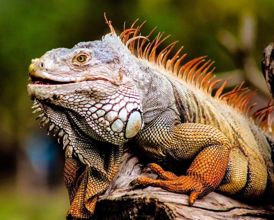Lizards by Ariya Namwong - Animals Reptiles ( scary, lizard, zoo, thailand, penny )