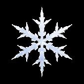 Snow Globe & Live WP Lite