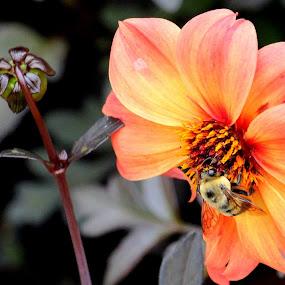 by Rachel Talley - Flowers Single Flower