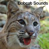 Bobcat Sounds