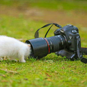 My Pic plz by Asmar Hussain - Animals - Cats Playing