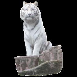 White Tiger Sitting Sticker