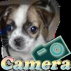 相机狗 icon