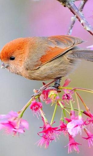 Птицы Живые Обои
