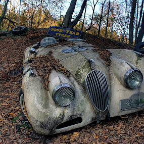 Old car by Greg Warnitz  - Transportation Automobiles ( car, old, oldtime, decay, abandoned )