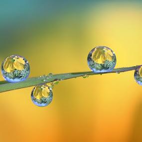 two dimensions by Dhimas Prastowo - Nature Up Close Water ( #fresh, #garden, #nature, #stilllife, #dews, #water, #drops, #macro, #morning )
