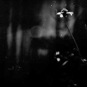 Noir flower by D K - Black & White Flowers & Plants ( noir, dark, leaf, leaves, flower )