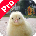 Sounds for kids - Pro icon