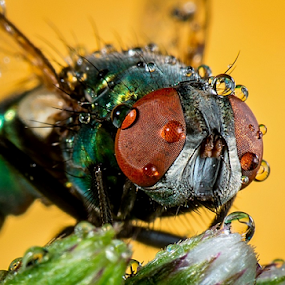 by Dave Lerio - Animals Insects & Spiders