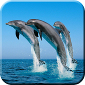 Dolphin Jump Live Wallpaper