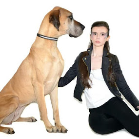 Great Dane with model  by Lisa Kirkwood - Animals - Dogs Portraits ( large dog model woman great dane )