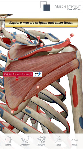 Muscle Trigger Point Anatomy - Android Apps on Google Play