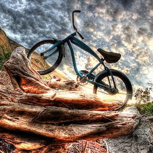 blue bike driftwood diagonal.jpg