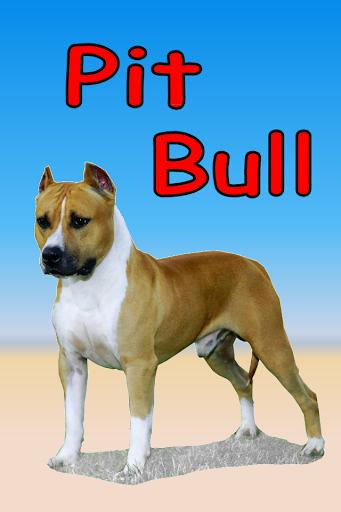 Pit Bull+