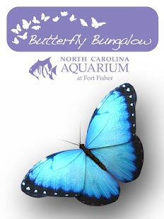 Butterfly Bungalow- screenshot thumbnail