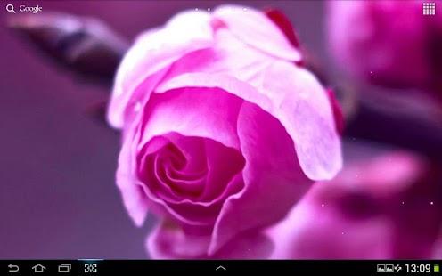 粉紅色的花動態桌布