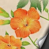 Campsis Grandiflora Atom theme