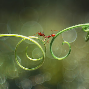 by Muntazeri Abdi - Animals Insects & Spiders