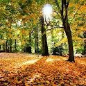 Autumn Wallpapers ao vivo icon