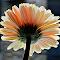 IMG_20140324_051134.jpg