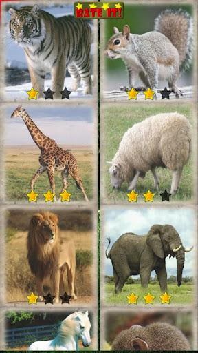 Sliding Puzzle: Animals