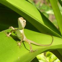Reptiles & Amphibians of the SE