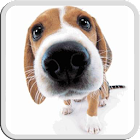 DOG LICKS SCREEN LWP FREE icon