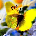Butterfly Daisy Live Wallpaper logo