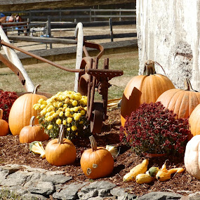 Autumn pumpkins and mums by Jessie Dautrich - Uncategorized All Uncategorized ( orange, fall colors, fall, pumpkins, flowers,  )