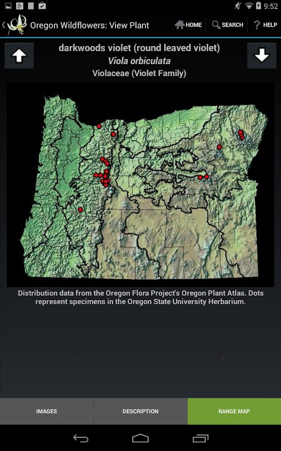 Oregon Wildflowers - screenshot