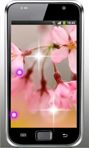 Spring Sakura 3D HD