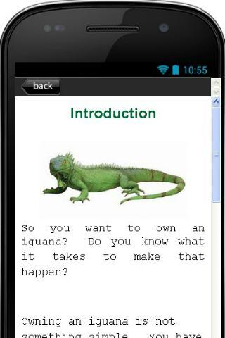Pet Iguana Care