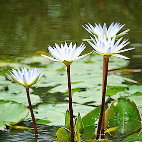 by Bem Beng - Flowers Flower Arangements ( love, postcard, valentine's day )