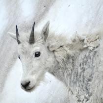 Biodiversity of Glacier National Park!