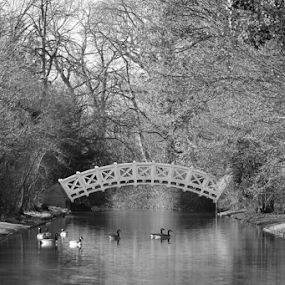 Bridge over a waterway in the gardens of Schwetzingen Castle by Birgit Vorfelder - Landscapes Waterscapes ( water, latticework, spanning water, black and white, leafless, ducks, trees, waterbirds, bridge, waterway,  )