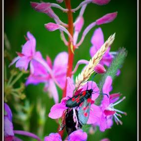 Moth on Flowers by Cheryll Duckworth - Flowers Flowers in the Wild