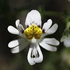 Mariposita Blanca