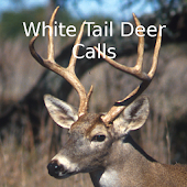 White Tail Deer Calls