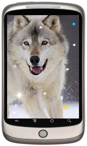 Wolf Best live wallpaper
