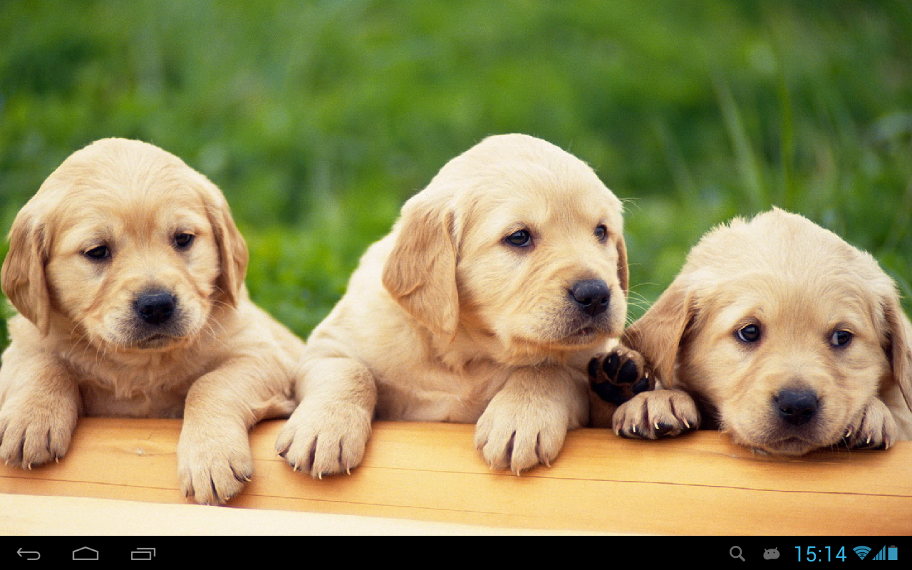 Puppies Dogs Live Wallpaper Screenshot