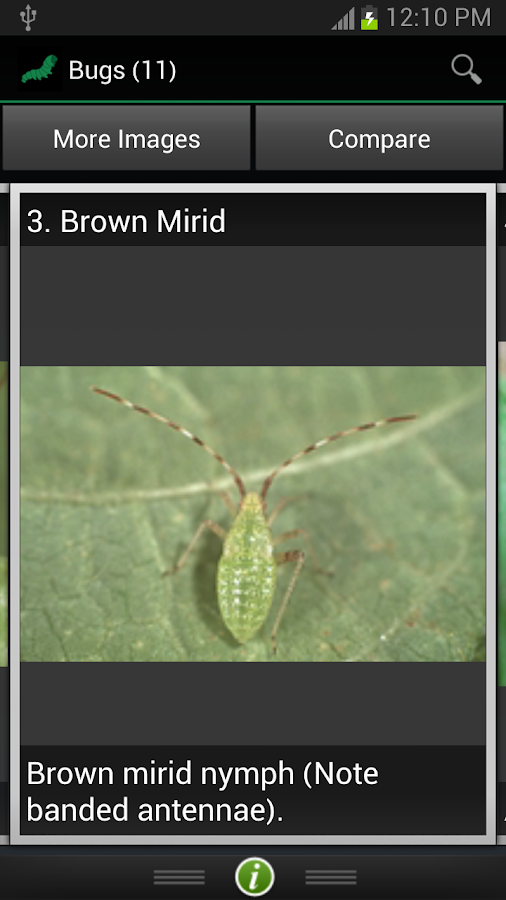 Insect ID: The Ute Guide- screenshot