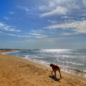 the dog by Alex Kapmar - Landscapes Beaches