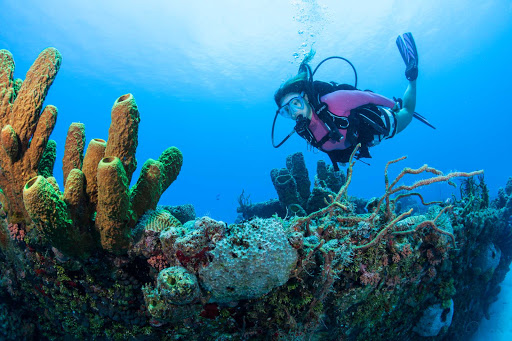 scuba-diver-coral-reef-USVI - A scuba checks inspects a coral reef in the US Virgin Islands.