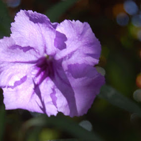 by Joko Pix - Flowers Flower Gardens