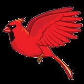 Zıp Zıp Kuş