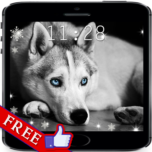 Husky Dogs live wallpaper 個人化 App LOGO-硬是要APP